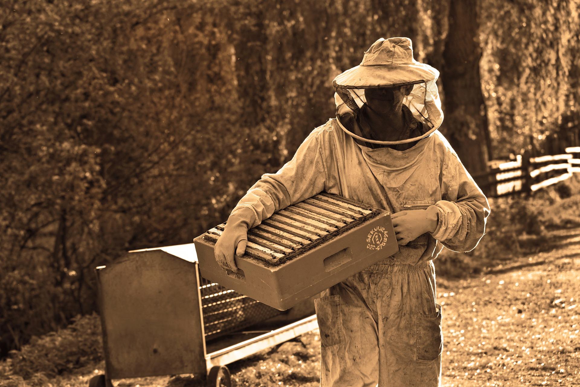 tipos de abeja miel natural